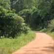 Trail - Bigodi Swamps - Uganda — Stock Photo