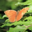 Butterfly - Bigodi Wetlands - Uganda, Africa - Stock Photo