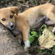 Puppy - Bigodi Wetlands - Uganda, Africa - Stock Photo