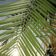 Stock Photo: Palm Leaf - Bigodi Swamps - Uganda