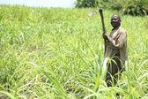 Sugarcane Plantation - Uganda, Africa — Stock Photo
