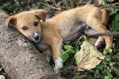 Puppy - Bigodi Wetlands - Uganda, Africa — Stock Photo