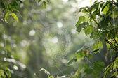 Spider Web - Remote Western Uganda — Stock Photo