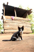 Kitten - Remote Western Uganda — Stock Photo