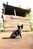 Gatinho - uganda ocidental remota — Foto Stock