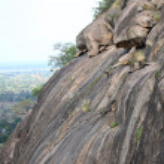 Baboon - Uganda, Africa — Stock Photo #12340748