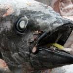 Fish Heads - Tsukiji Fish Market, Tokyo, Japan — Stock Photo #12465440