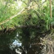 Jungle - Bigodi Swamps - Uganda — 图库照片 #12468810