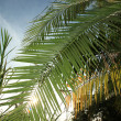 Palm Leaf - Bigodi Swamps - Uganda - Stock fotografie