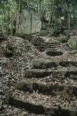 Steps in Forest - Mt Misen, Miyajima, Japan — Stock Photo