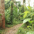 Trail - Bigodi Swamps - Uganda - Stock Photo