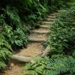 Stock Photo: Steps - Mariyudo Waterfall Trek, Iriomote Island, Okinawa, Japan