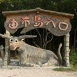 Water Buffalo - Iriomote Jima Island, Okinawa, Japan - Stock Photo