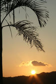 Palm Tree Silhouette - Iriomote Jima Island, Okinawa, Japan — Stock Photo