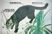 Iriomote Cat - , Iriomote Island, Okinawa, Japan — Stock Photo