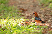 Bird - Uganda, Africa — Stock Photo