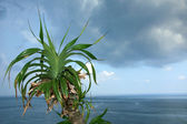 Tropical Tree and Sea — Stock Photo