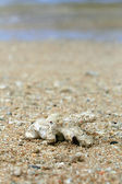 Coral Washed up on Beach — Stock Photo