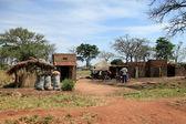 Africké chaty - uganda, afrika — Stock fotografie