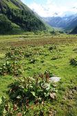 Vegetation in The Alps — Stock Photo