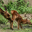 Stock Photo: Mother and Baby Deer, Japan