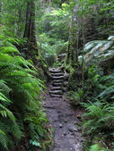 Stairway through Rainforest — Stock Photo