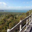 Rangitoto Island, New Zealand — Stock Photo