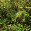 Jungle - Bigodi Swamps - Uganda - Stock Photo