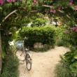 Stock Photo: Floral Archway - Taketomi Island , Okinawa, Japan