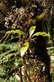 Foliage -Tongariro National Park, New Zealand — Stock Photo