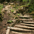 Forest - Chilkoot Gold Mine Trail, Alaska, USA — Foto de Stock