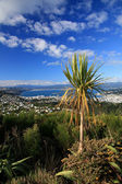 Vue depuis la colline de wrights, wellington, nouvelle-zélande — Photo