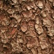 Stock Photo: Tree Bark, Skagway, Alaska, USA