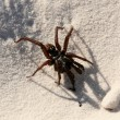 Funnel Web Spider - Fraser Island, UNESCO, Australia — Stock Photo