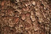 Tree Bark, Skagway, Alaska, USA — Stock Photo