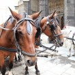 Horse at Stephansdom, Vienna - Stockfoto