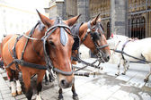 Horse at Stephansdom, Vienna — Stock Photo