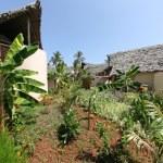 Azanzi Hotel, Zanzibar, Africa — Stock Photo #13057101