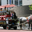 Horse Drawn Carriage, Sapporo, Japan — Stock Photo