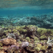 Great Barrier Reef, Australia — Stockfoto #13075497