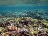 Great Barrier Reef Australien — Stockfoto