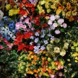 Flower Shop at Ben Thanh Market — Stock Photo