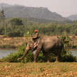 Stock Photo: Elephant at Hue, Vietnam