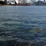 Sydney Harbour Bridge - Sydney, Australia — Stock Photo