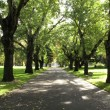 Walkway, Carlton Gardens, Melbourne, Australia — Stock Photo