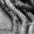 Stock Photo: Boat Rope - Sydney, Australia