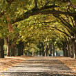 Walkway, Carlton Gardens, Melbourne, Australia — Stock Photo #13830996