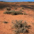 Outback - The Red Centre, Australia — Stock Photo #13831400