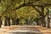 Gehweg, carlton gardens, melbourne, australien — Stockfoto