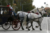 Horse and Cart - Melbourne, Australia — Stock Photo